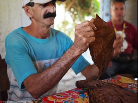 Farmer rolling tobacco from his farm into cigars